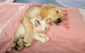Sleeping-Cat-and-Dog2