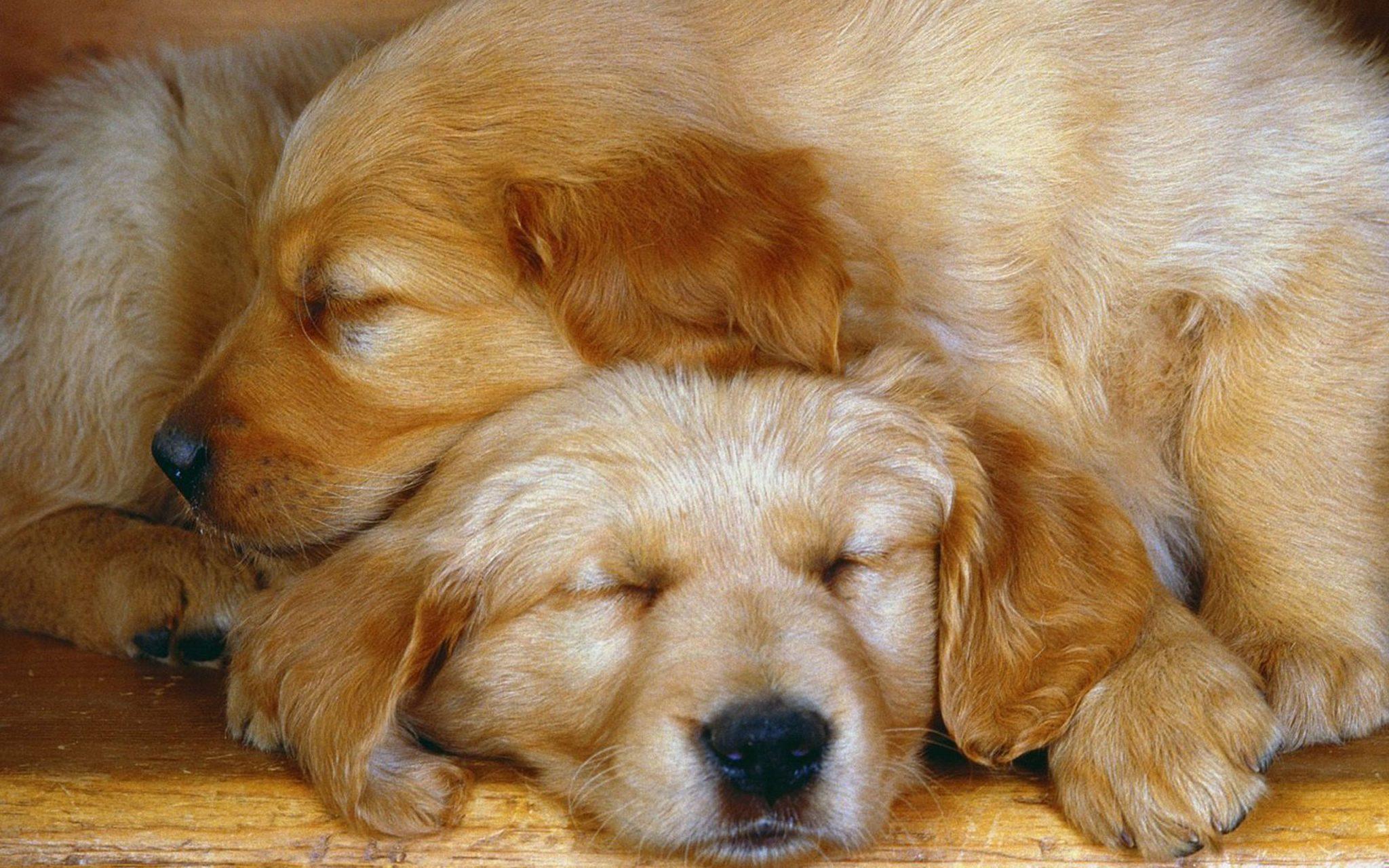 Sleeping dog3