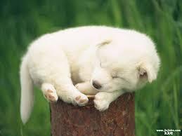 Sleeping dog7jpg