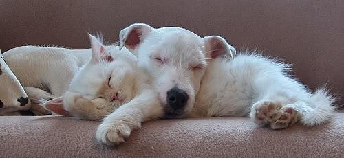 Spánkový knokaut 7
