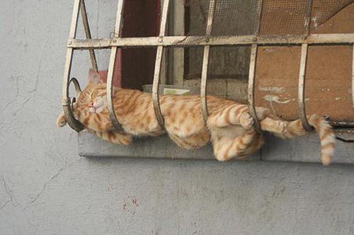 Spánkový knokaut 8