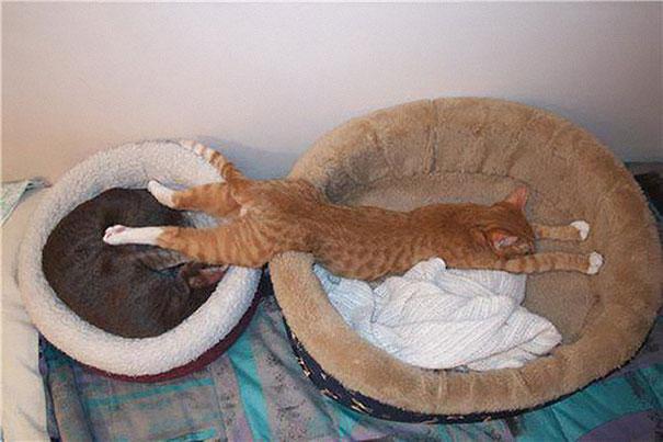 funny-sleeping-cats-26